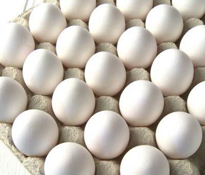 Desempenho do ovo no primeiro mês de 2019