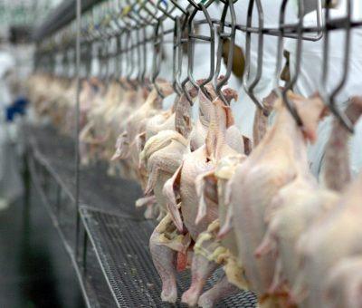 2ª semana de abril mostra recuperação nos embarques de carne de frango