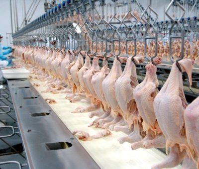 Caiu, no 1º trimestre de 2019, o peso médio do frango abatido em estabelecimentos inspecionados