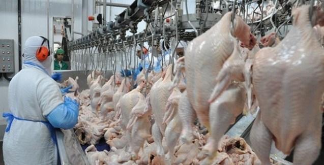Carne de frango no Brasil: dois anos de crescimento, prevê o USDA