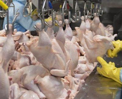 Desempenho do frango abatido no 1º mês de 2019