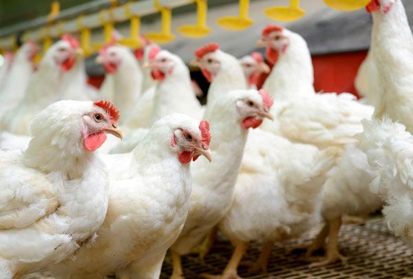 1ª Semana do Ovo Online – Alimentando Mentes